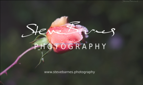 Steve Barnes Photography - January 2019 Fine-Art Slideshow
